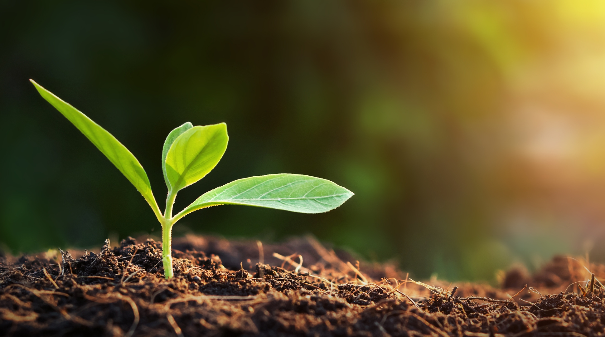 Healthy soil – The key to crop resilience and farmer success