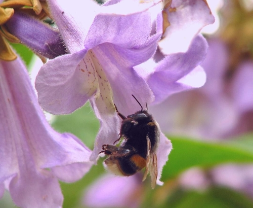 Trees and Bees: Friends with Benefits