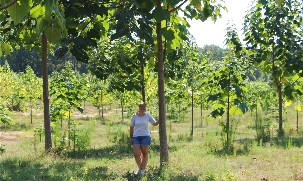 Is the Empress (Paulownia) tree invasive?