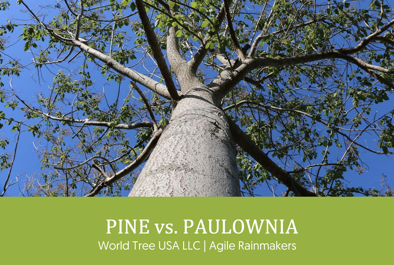 Receive a copy of the Pine vs. Paulownia Report